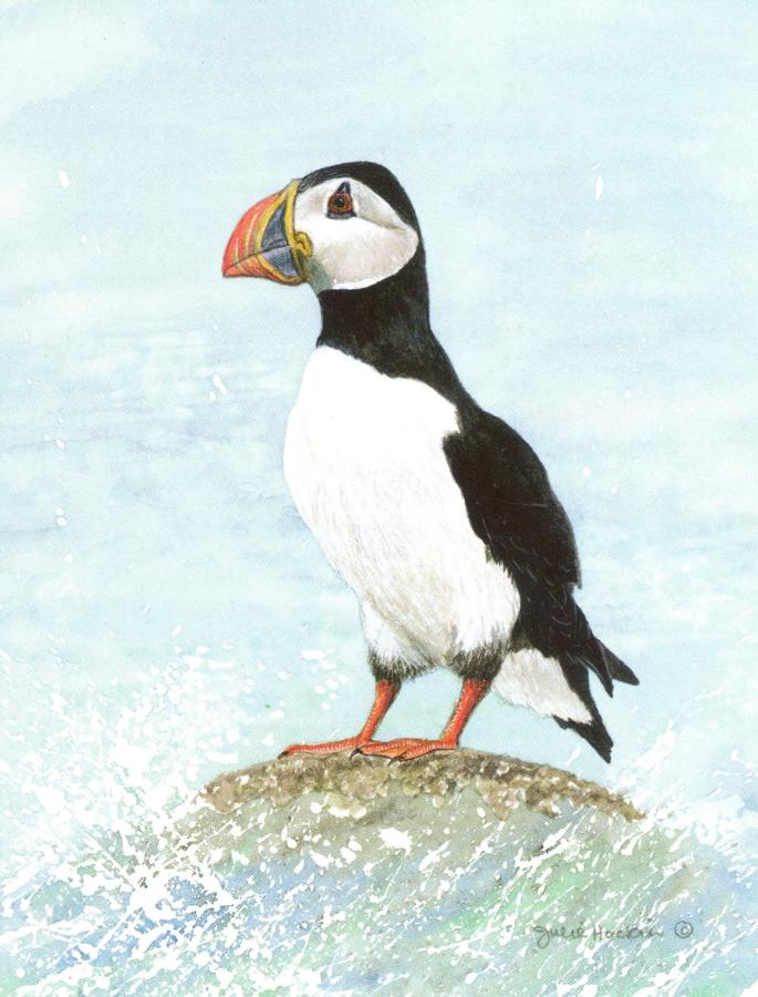 Pack of Notecards - Puffin