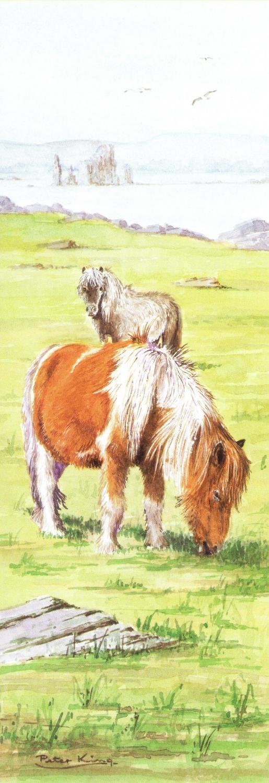Bookmark - Shetland Pony