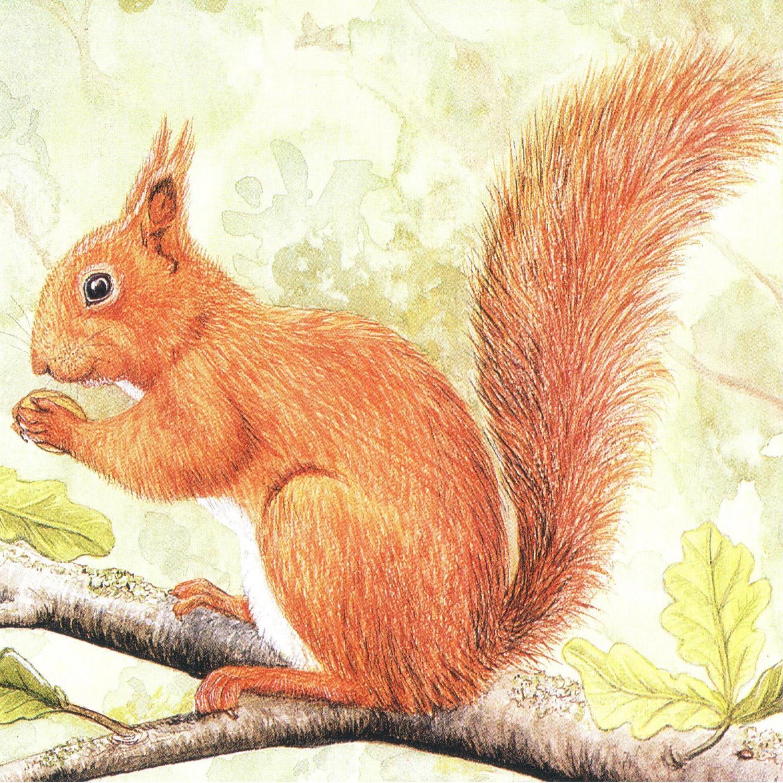 Acrylic Coaster - Red Squirrel