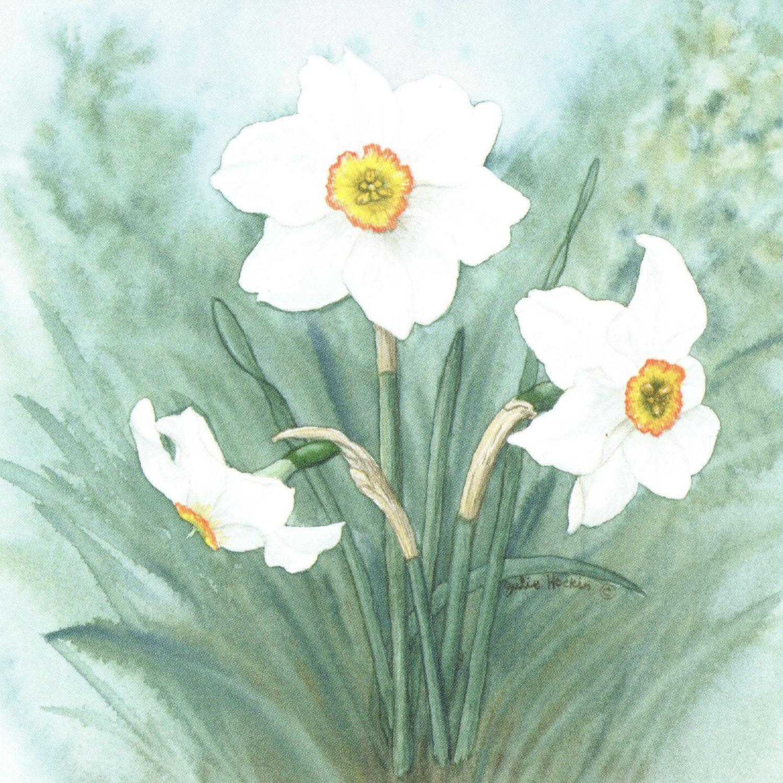Acrylic Coaster - Narcissus