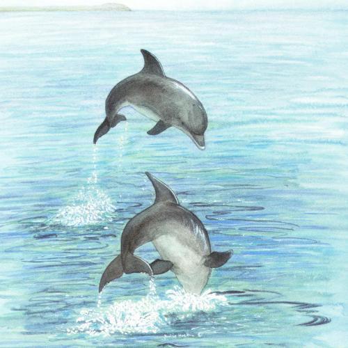 Acrylic Coaster - Dolphins