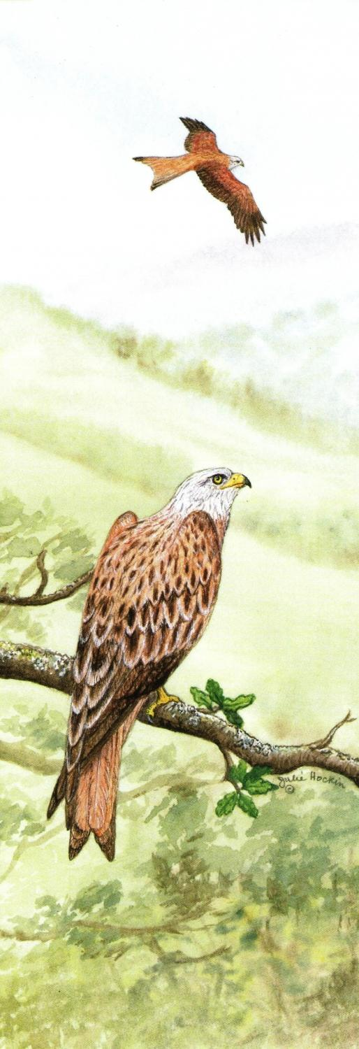 Bookmark - Red Kite