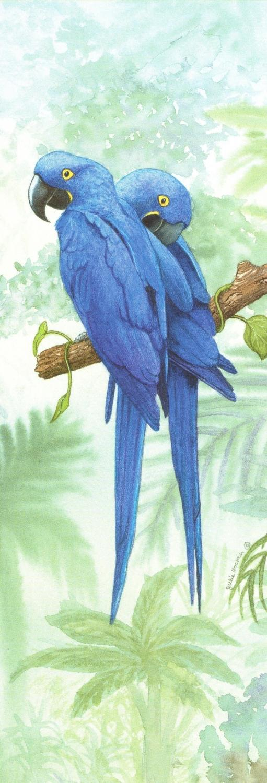 Bookmark - Hyacinth Macaw
