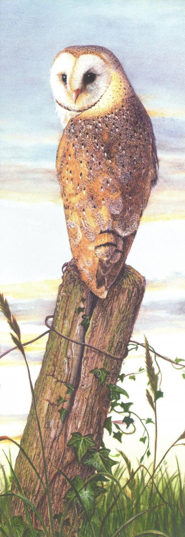 Bookmark - Barn Owl at Dusk
