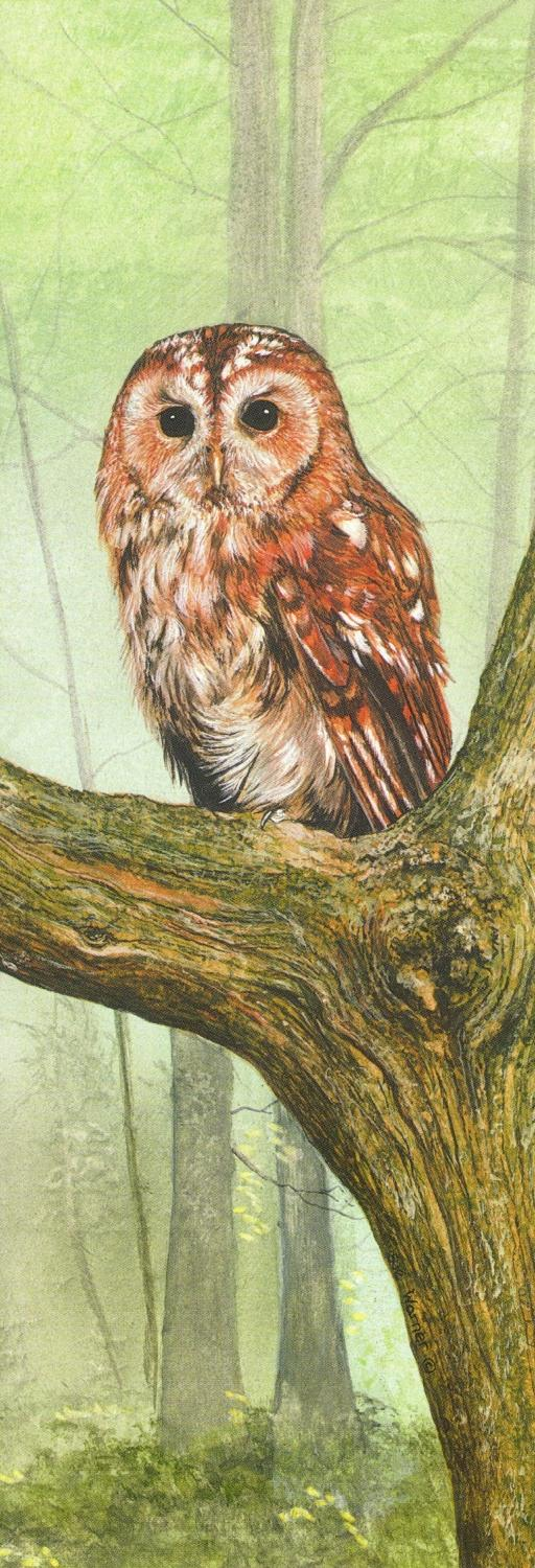 Boomark - Tawny Owl at Rest