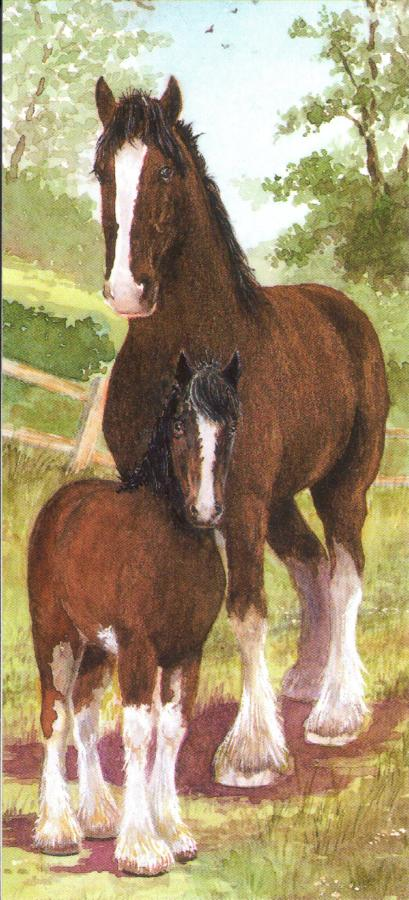 Magnetic Bookmark - Shire Horse