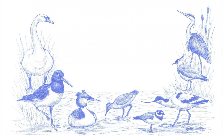 Eco Labels - Water Birds