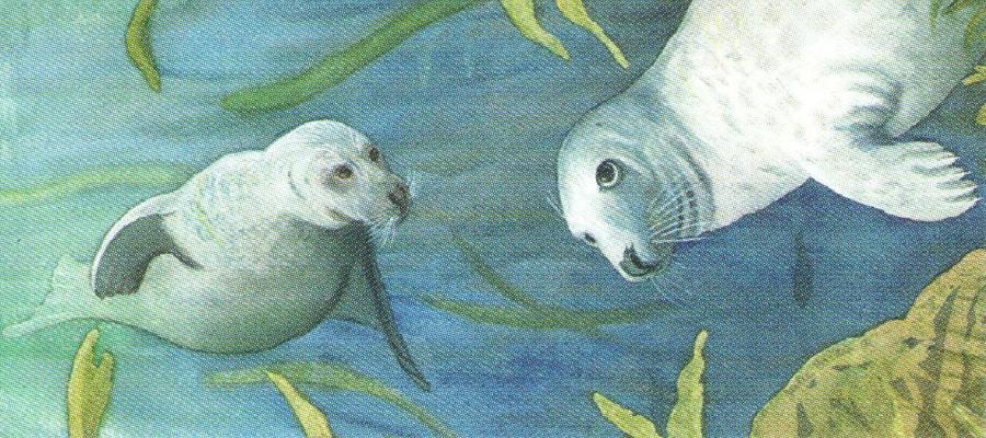 Letter Opener - Grey Seals