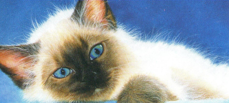 Letter Opener - Ole Blue Eyes