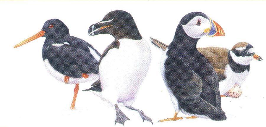 Letter Opener - Birds of Coast & Estuary