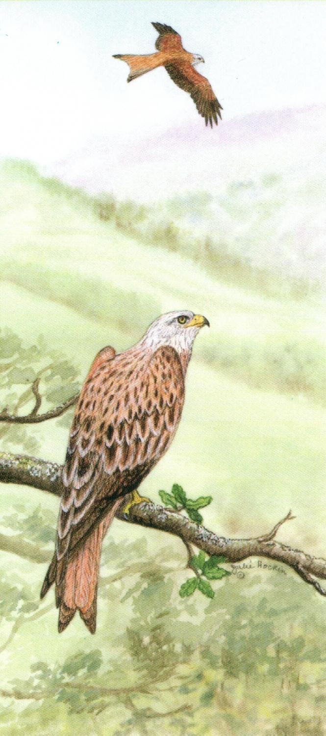 Magnetic Bookmark - Red Kite
