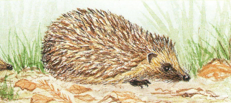 Letter Opener - Hedgehog