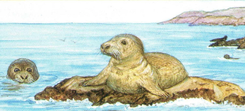 Letter Opener - Seal