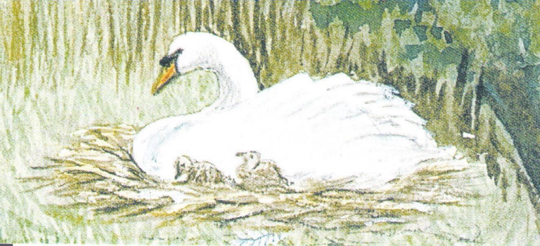 Letter Opener - Swan