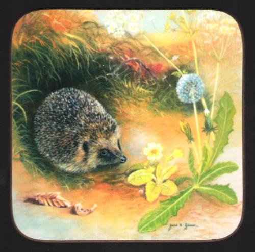 Coaster - Hedgehog & Dandelion