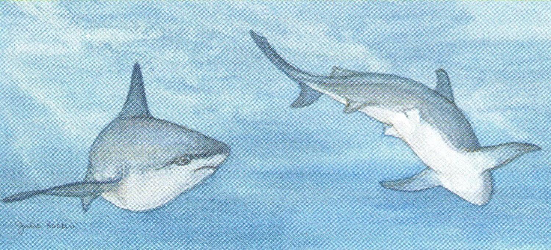 Letter Opener - Shark