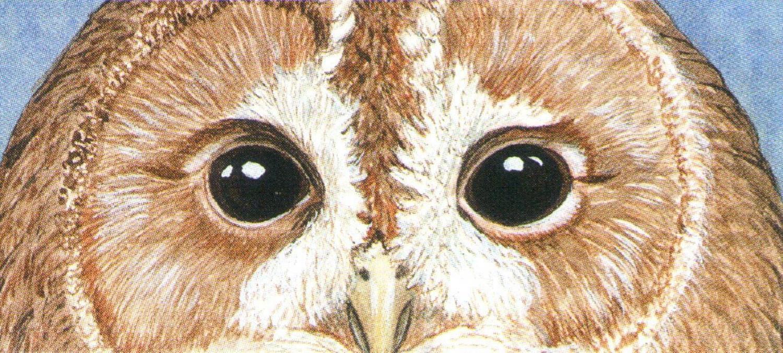 Letter Opener - Owls Eyes