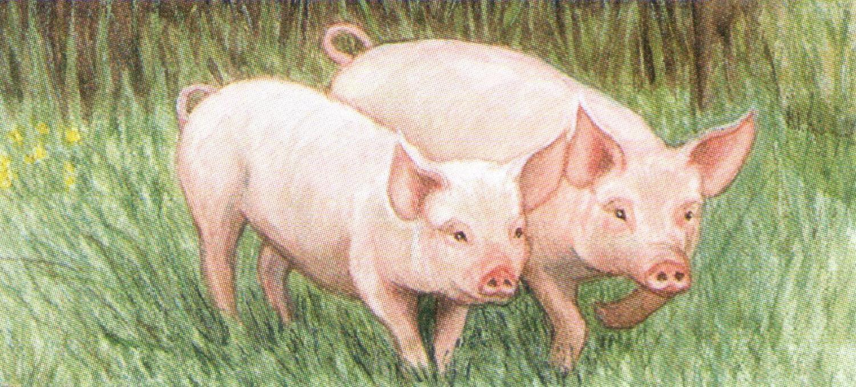 Letter Opener - Pigs