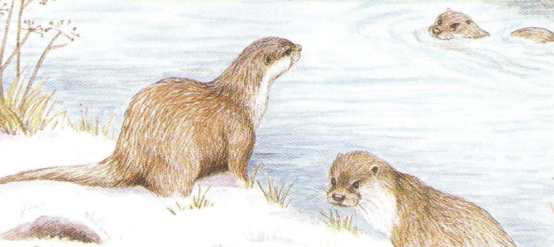Letter Opener - Otter