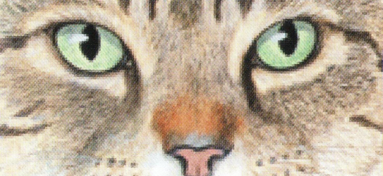 Letter Opener - Cats Eyes