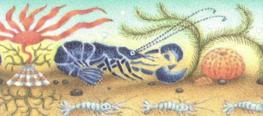 Letter Opener - Lobster