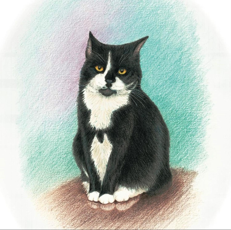 Coaster - Black & White Cat