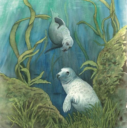 Coaster - Grey Seals