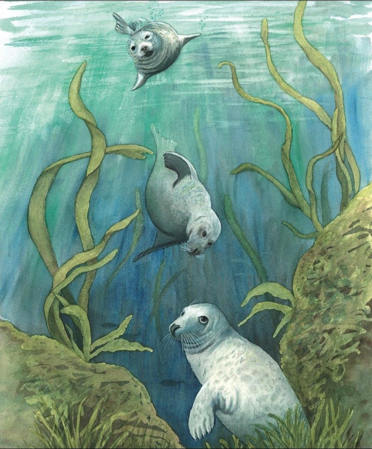 Glasses Cleaning Cloth - Grey Seals