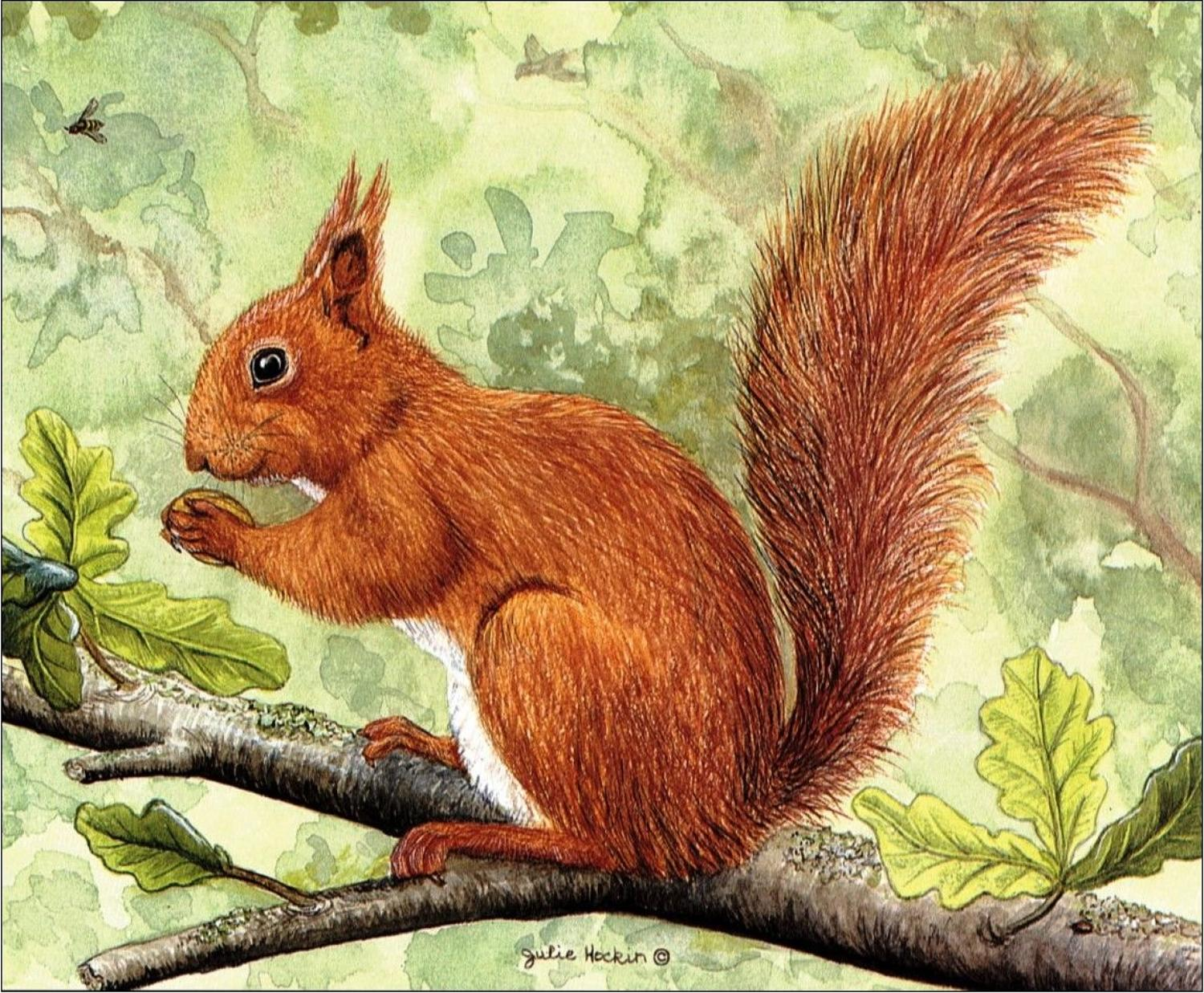 Glasses Cleaning Cloth - Red Squirrel