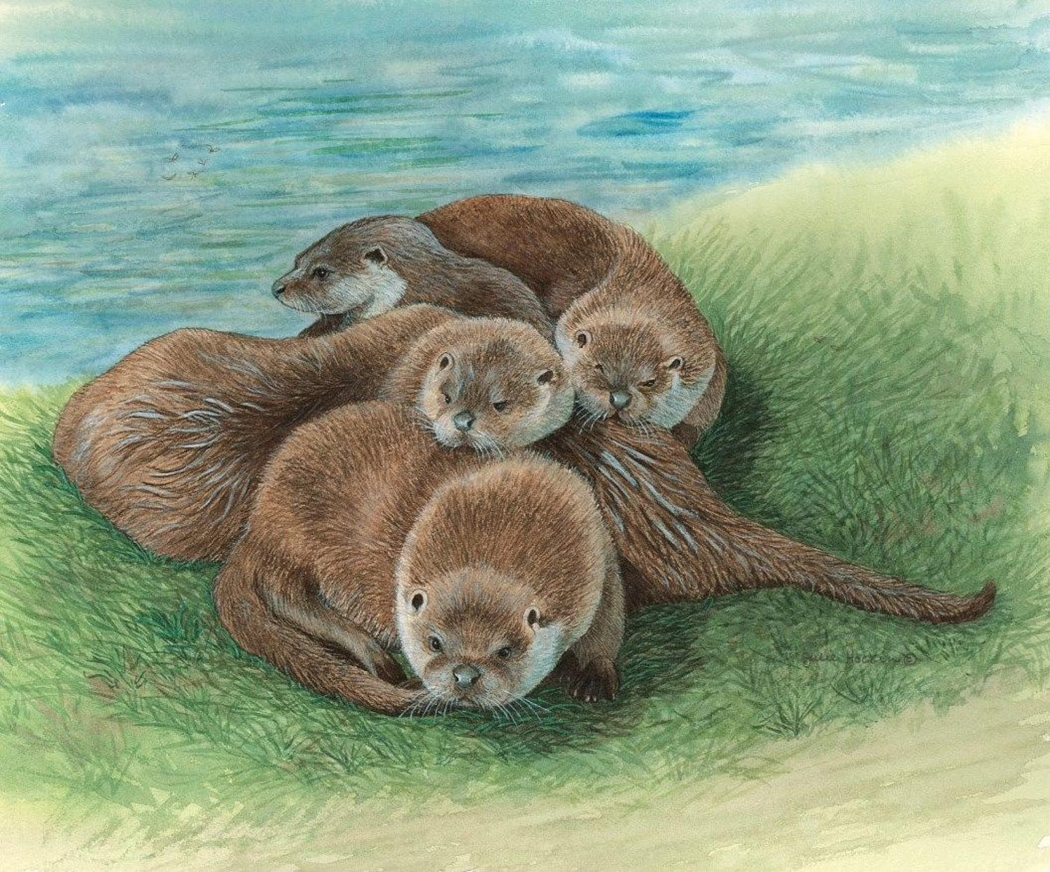 Glasses Cleaning Cloth - Tangle of Otters