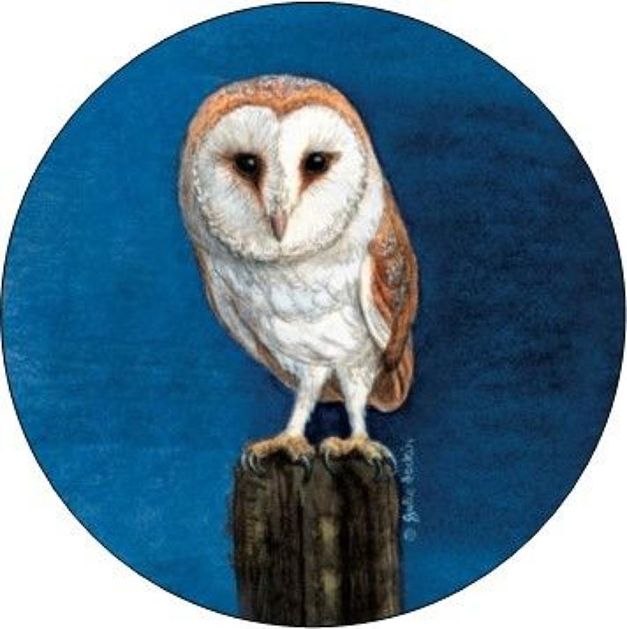 Pill Box - Barn Owl