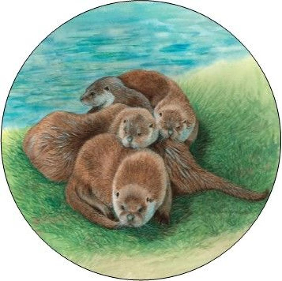 Pill Box - Tangle of Otters