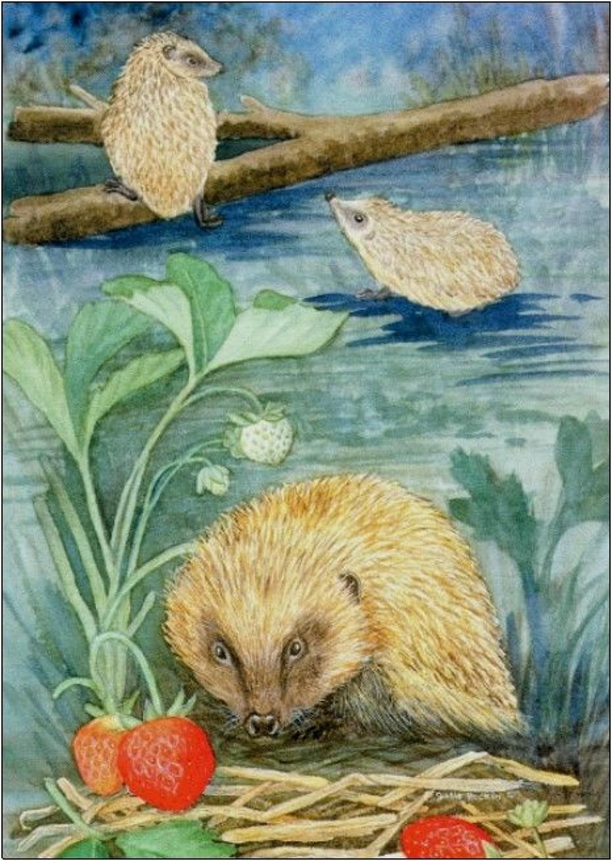 Pen - Hedgehog