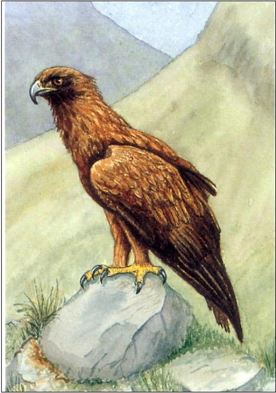 Pen - Golden Eagle