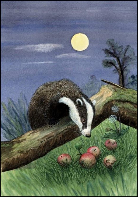 Pen - Badger