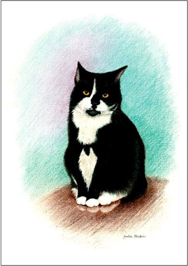 Pen - Black & White Cat