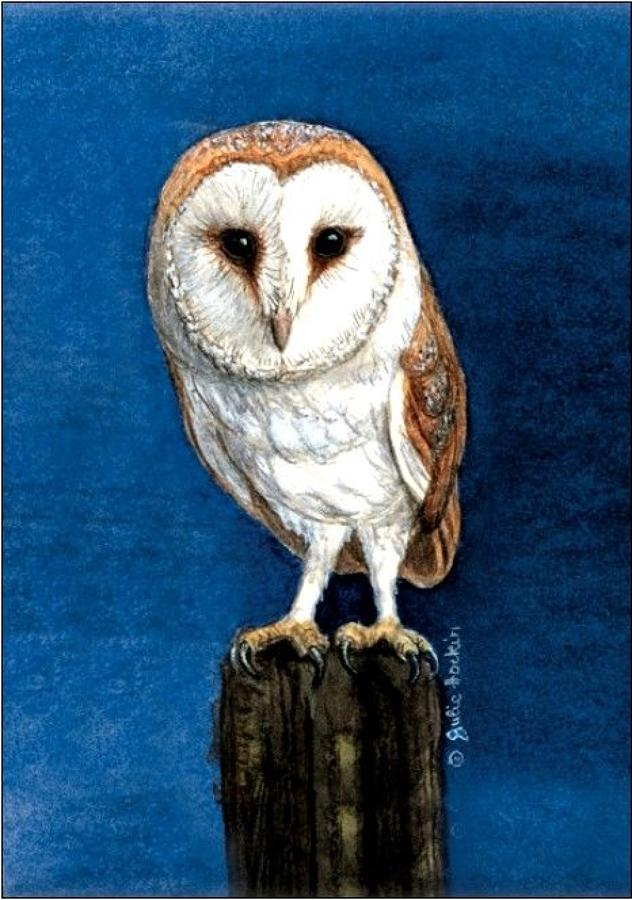 Pen - Barn Owl