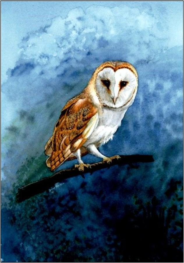 Pen Barn Owl