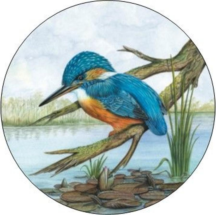 Compact Pocket Mirror - Kingfisher