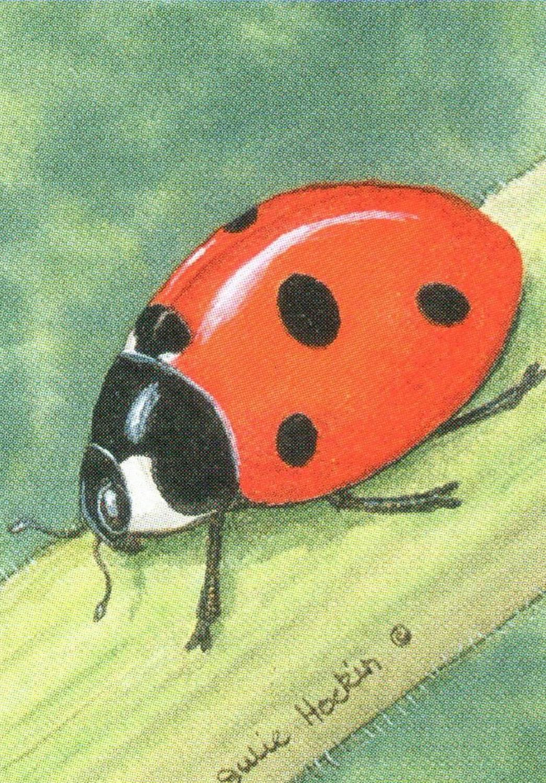 Bottle Opener Keyring - Ladybird