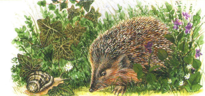 Magnetic Letter Opener - Hedgehog & Snail