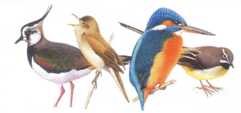 Magnetic Letter Opener-Birds of River & Marsh