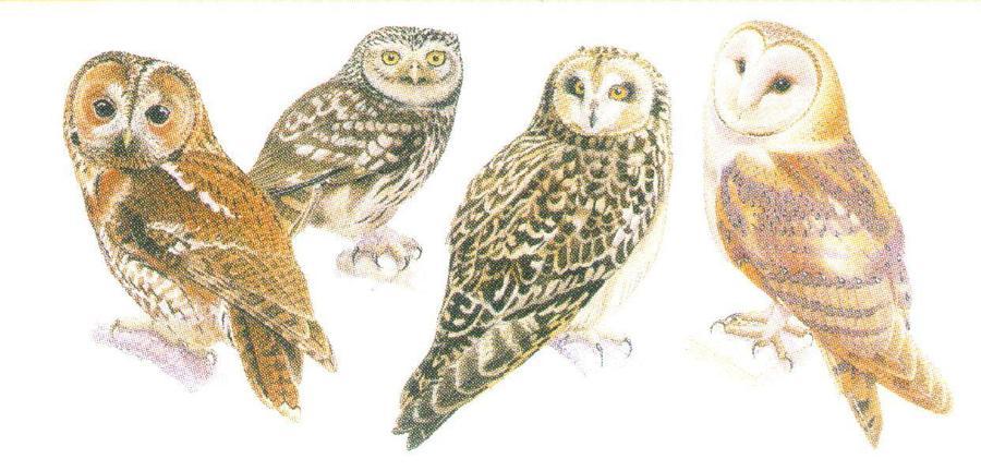Magnetic Letter Opener - Owls