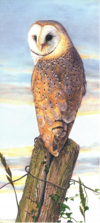 Magnetic Bookmark - Barn Owl at Dusk