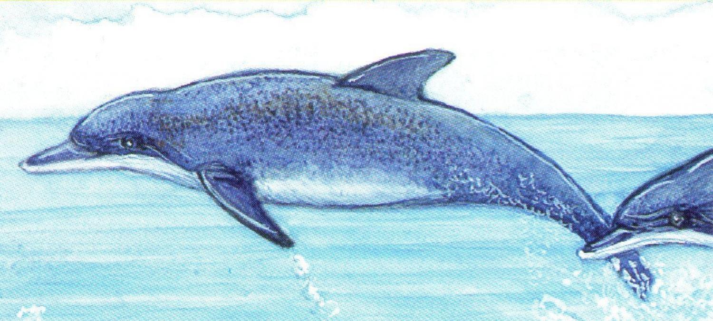 Magnetic Letter Opener - Dolphins