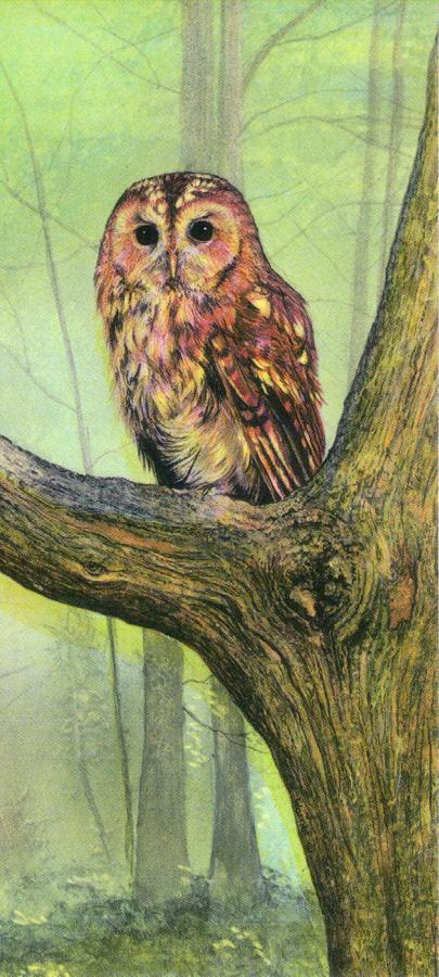 Magnetic Bookmark - Tawny Owl
