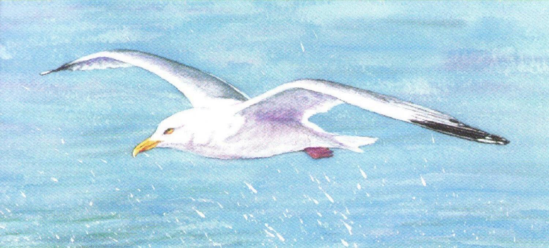 Magnetic Letter Opener - Seagull