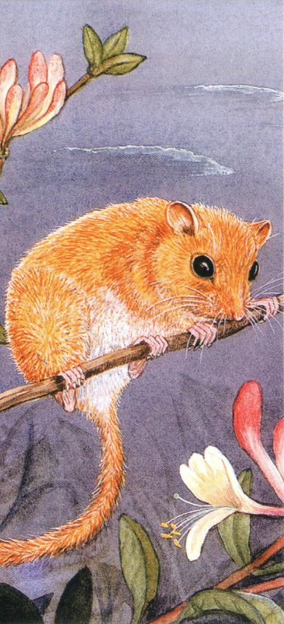 Magnetic Bookmark - Dormouse