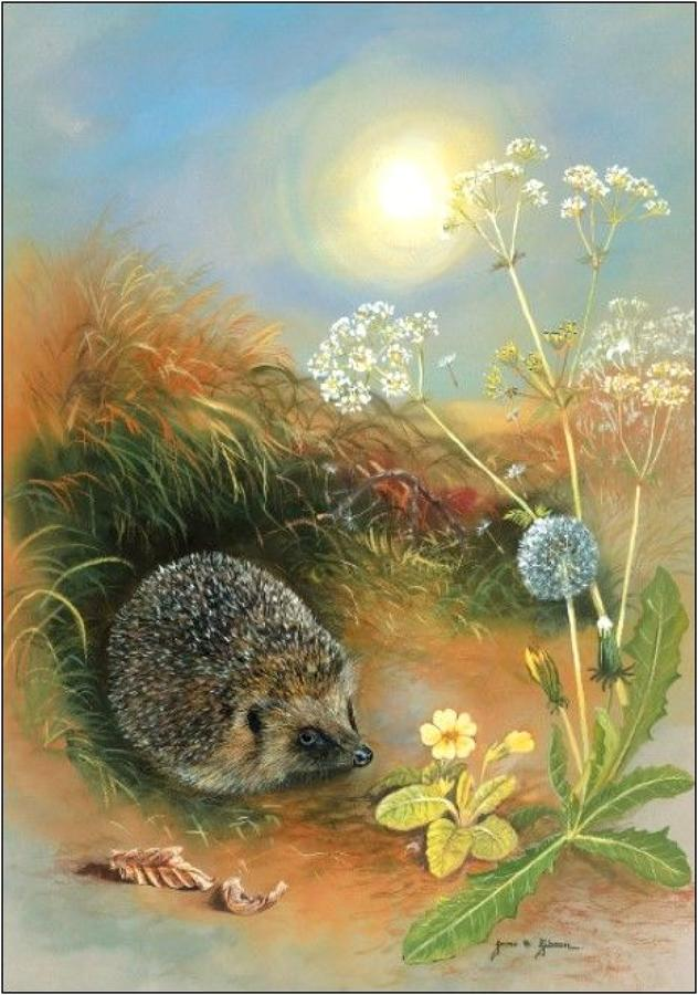 Pen - Hedgehog & Dandelions