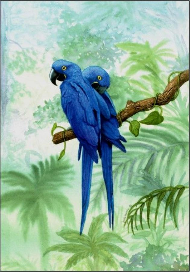 Pen - Hyacinth Macaw